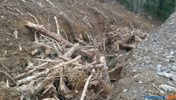 Скоро лес  на сопках уничтожат.