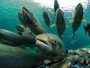Было время - была рыба...